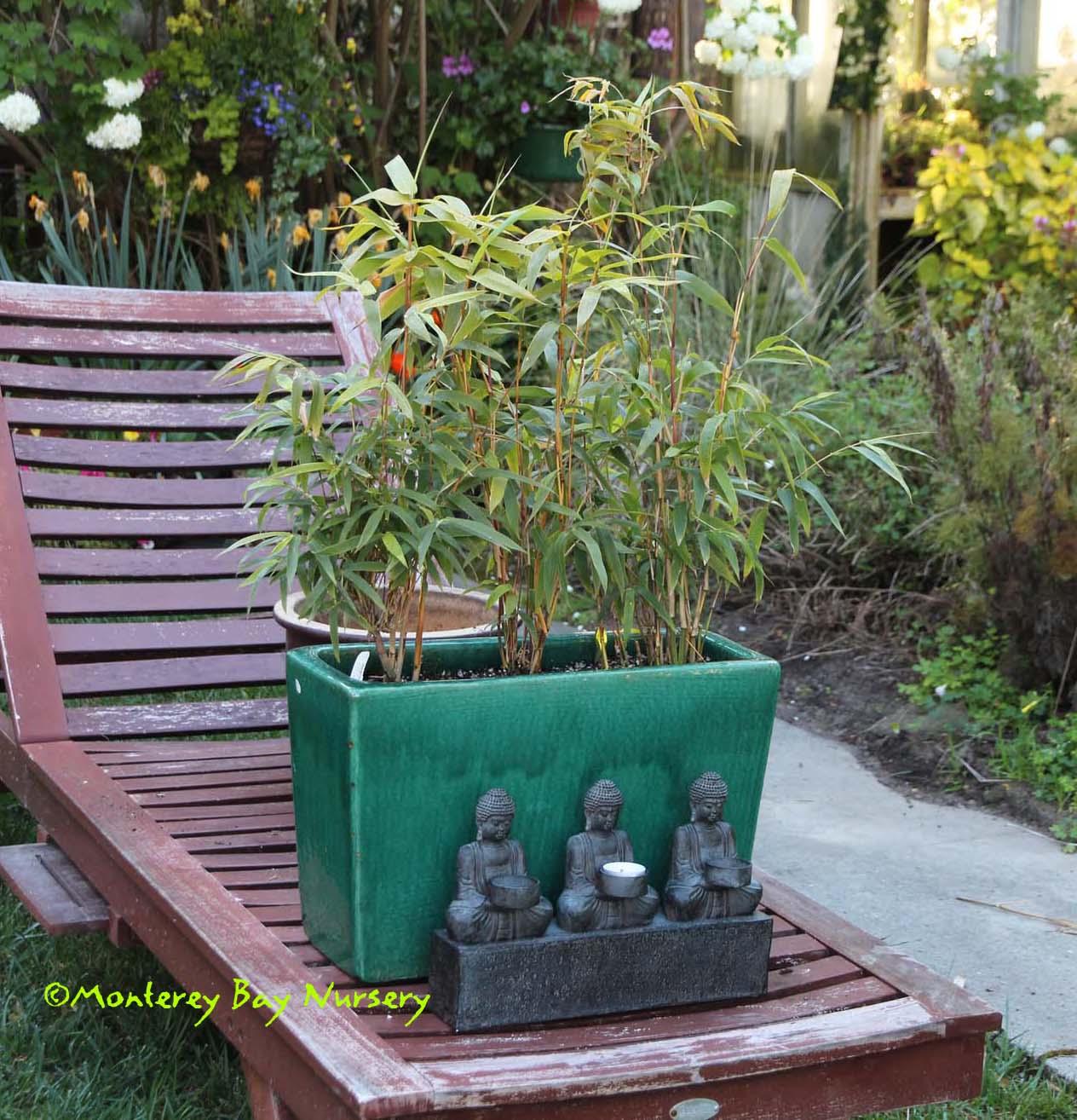 Stupendous Monterey Bay Nursery Plants B Interior Design Ideas Oteneahmetsinanyavuzinfo